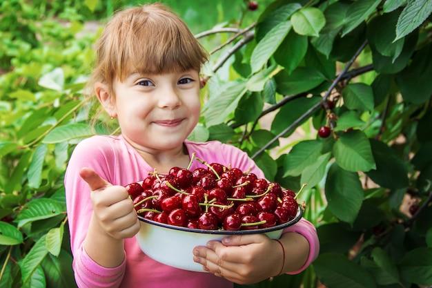 A criança está colhendo cerejas no jardim. foco seletivo.