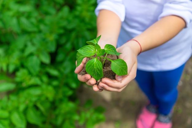 A criança está plantando mudas no jardim