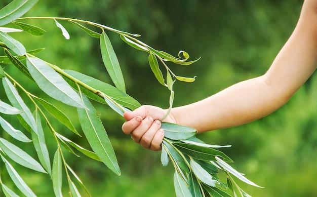 A criança está segurando um galho de árvore em suas mãos. proteção de plantas. foco seletivo.
