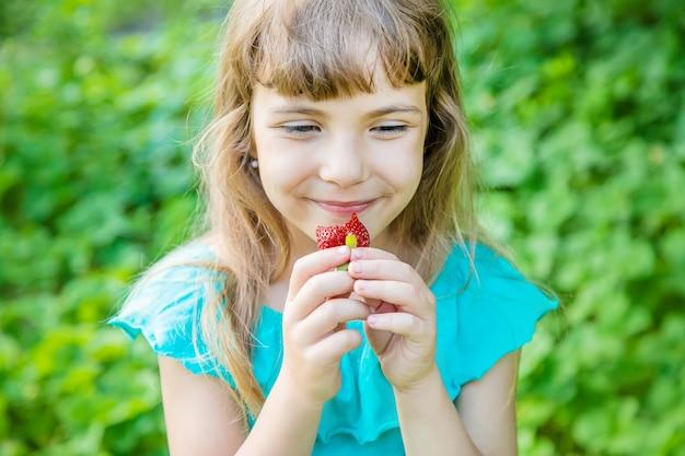 A criança recolhe morangos no jardim. foco seletivo.