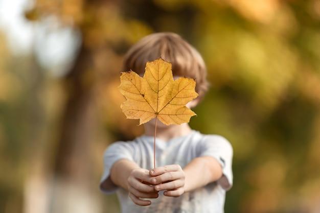 A criança segura uma folha de bordo amarela com o braço estendido e cobre o rosto