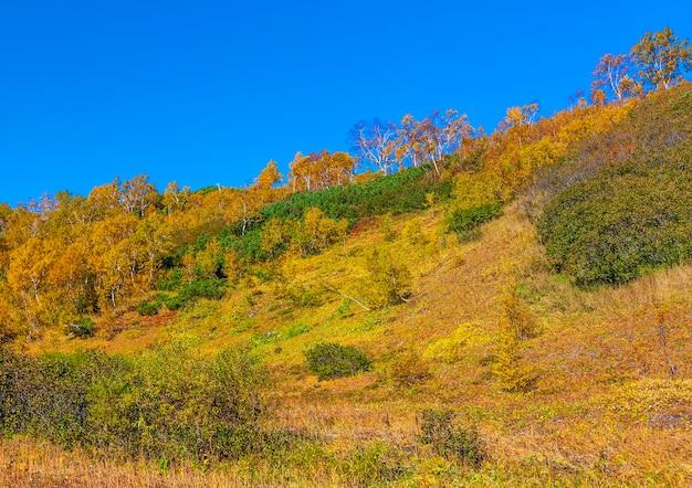 A encosta do vulcão coberto de pinheiros.