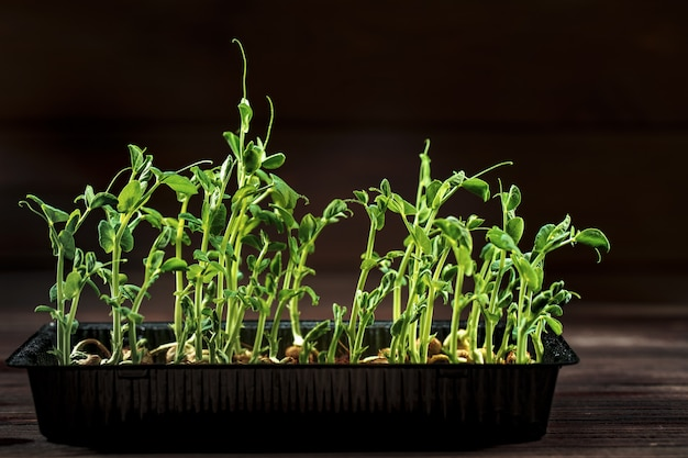 A ervilha microgreen brota na mesa de madeira velha