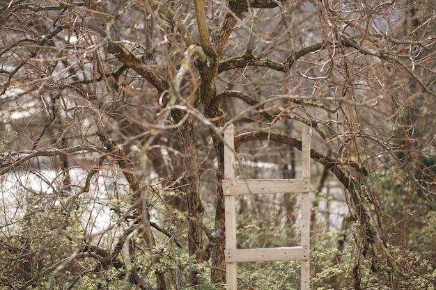 A escada de madeira perto de uma árvore