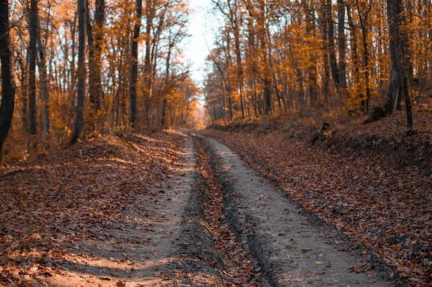 A estrada bela floresta de outono nos raios de sol
