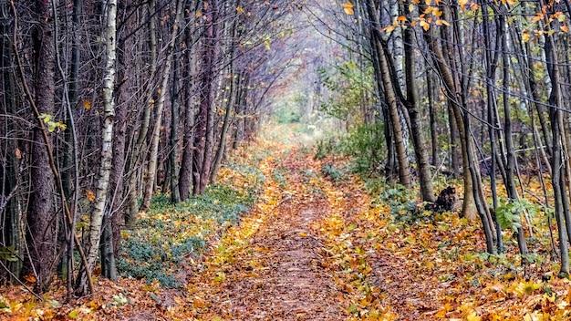 A estrada coberta de folhas caídas na floresta de outono
