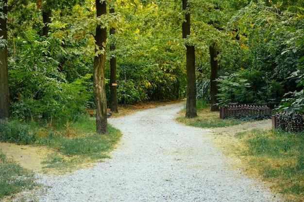 A estrada de acesso de cascalho nas árvores em um dia ensolarado de verão