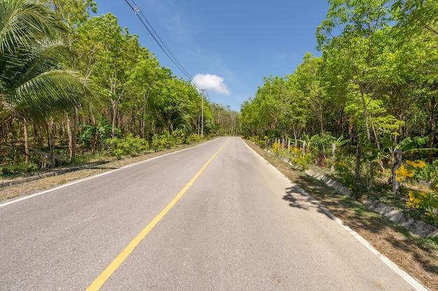 A estrada de asfalto através da plantação de seringueiras na temporada de verão lindo fundo de céu azul em phuket, tailândia.