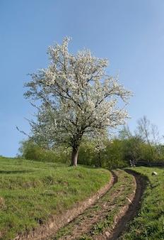 A estrada de terra está nas montanhas. paisagem linda primavera com árvore florida.