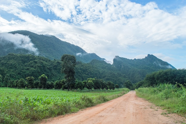 A estrada é um longo caminho para as montanhas. bela paisagem natural