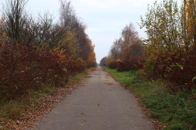 A estrada entre as árvores no outono