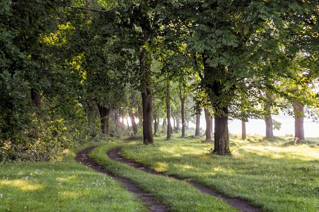 A estrada está na floresta perto do rio. manhã de verão na floresta