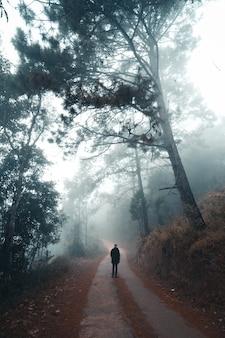 A estrada na floresta pela manhã, na floresta fria e enevoada