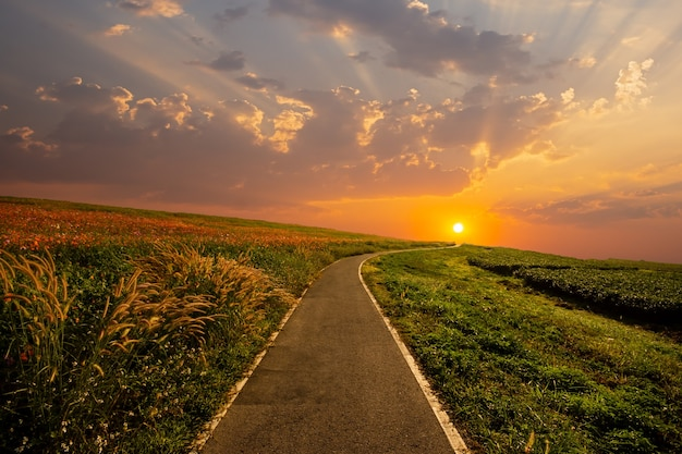 A estrada passou por pastagens e pastagens a paisagem no início do verão ao pôr do sol
