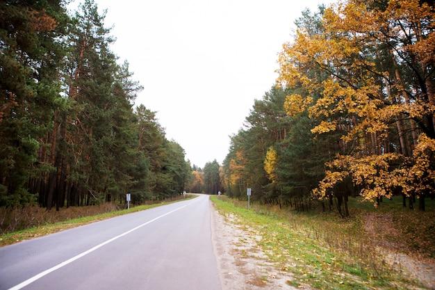 A estrada que atravessa a floresta de pinheiros no outono