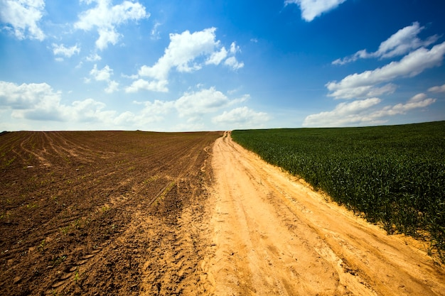 A estrada rural não asfaltada passando por um campo agrícola