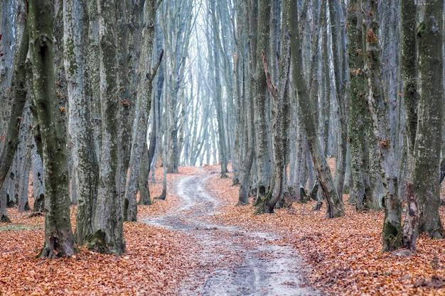 A estrada sinuosa entre as árvores na floresta de outono_