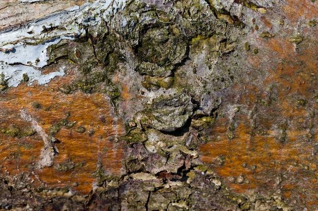 A estrutura da casca da árvore, para proteger a madeira de insetos e pragas