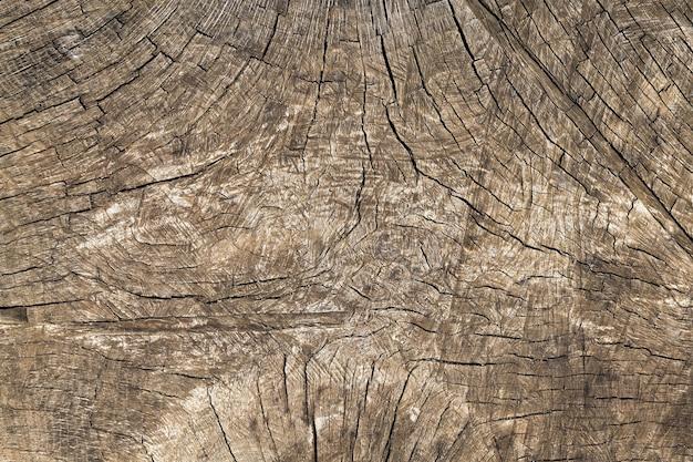 A estrutura da madeira rachada do tronco da árvore
