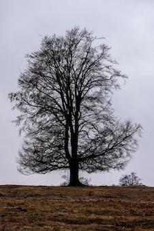 A faia europeia ou faia comum (fagus sylvatica) é uma árvore caducifólia pertencente à família da faia fagaceae