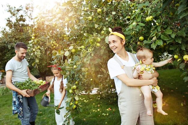 A família jovem feliz durante a colheita de maçãs em um jardim ao ar livre