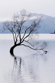 A famosa árvore wanaka ou árvore solitária de wanaka, no lago wanaka, ilha do sul, nova zelândia