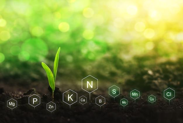 A fertilização e o papel dos nutrientes na vida das plantas