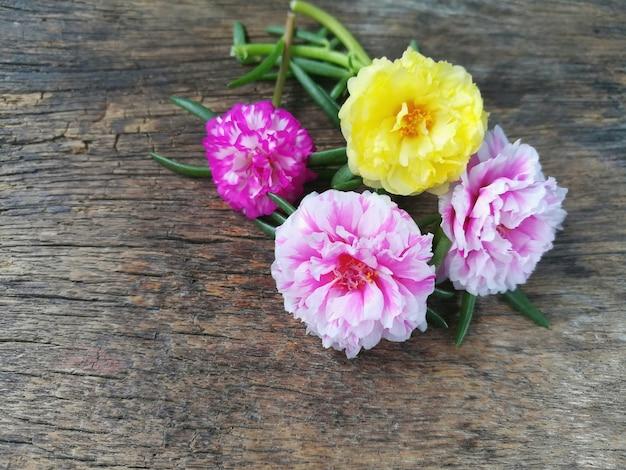 A flor cor-de-rosa doce do musgo cor-de-rosa e amarelo é bonita no fundo de madeira.