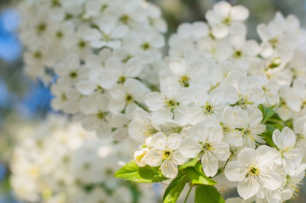 A flor da árvore alongada