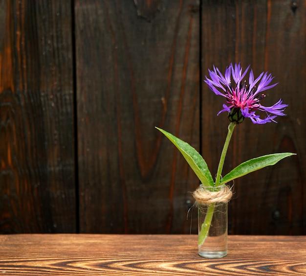 A flor da centáurea fica em um pequeno frasco de vidro sobre um fundo escuro de madeira