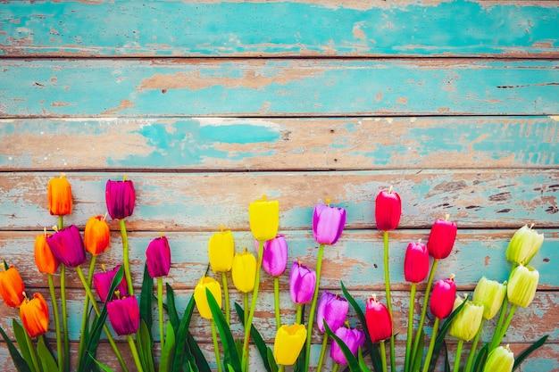 A flor da tulipa floresce no fundo de madeira do vintage, projeto do quadro da beira.