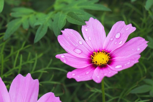 A flor rosa