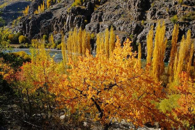 A floresta amarela e a laranja deixam árvores na estação do outono.