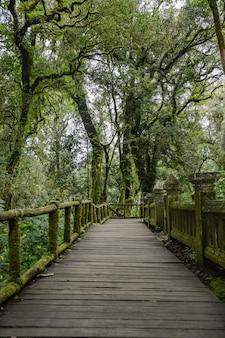 A floresta bonita colina úmida no topo do doi inthanon o pico mais alto da tailândia.