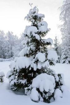 A floresta cobriu com neve pesada na estação do inverno em lapland, finlandia.
