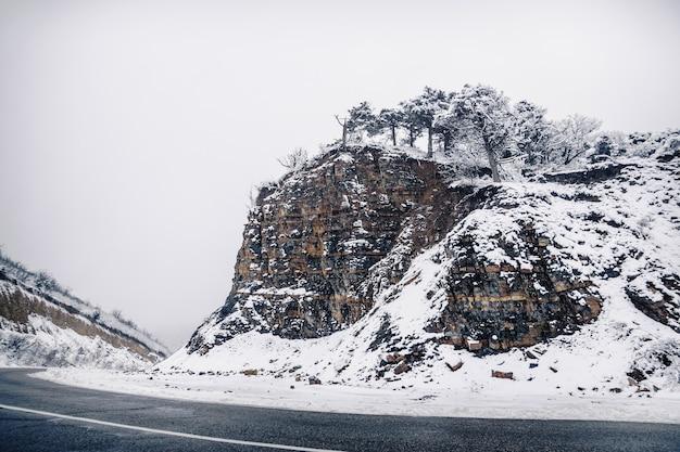 A floresta de zimbro cresce em um penhasco de alta montanha acima de uma curva da estrada. natureza na neve. inverno.