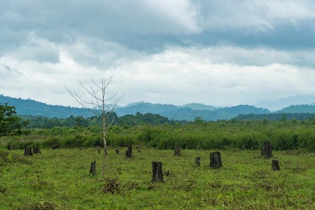 A floresta foi cortada e destruída.