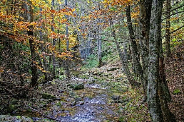 A floresta no outono na calábria itália