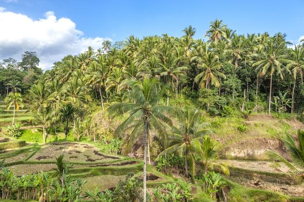 A floresta tropical em bali, na ásia.