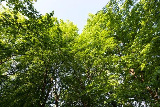 A folhagem das árvores é iluminada pela luz solar intensa, árvores com folhagem verde no verão