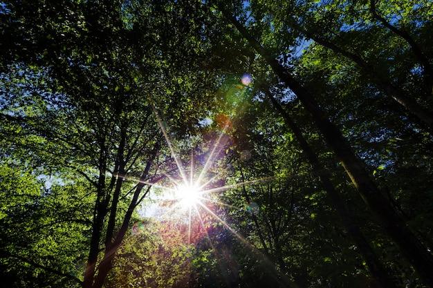 A folhagem das árvores é iluminada pela luz solar intensa
