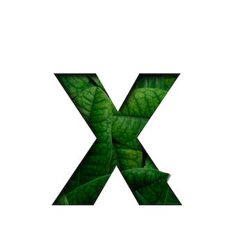 A fonte folheia x feita das folhas vivas reais com forma preciosa do corte de papel.