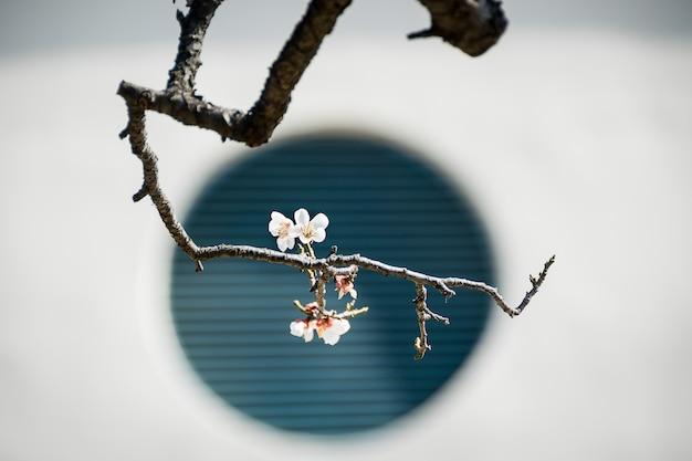 A forma das flores de ameixa