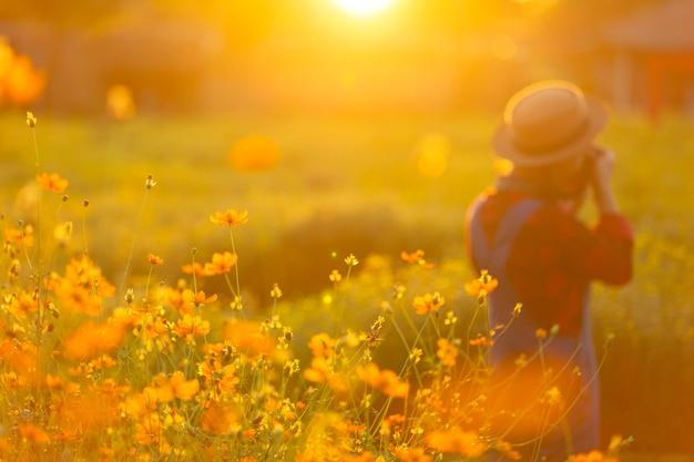A fotografia da mulher toma a foto na flor do cosmos graden no tempo do por do sol.