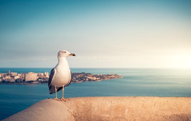 A gaivota em uma parede no mar