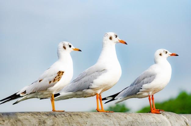 A gaivota que está na ponte, pássaro voa sobre o mar, gaivota paira sobre o mar azul profundo.