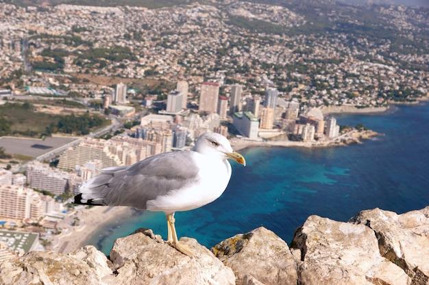 A gaivota senta-se nas rochas da montanha, tendo como pano de fundo a cidade e o mar abaixo.