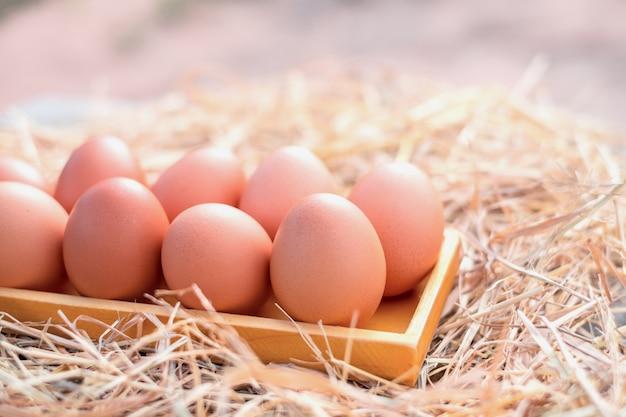 A galinha da boa qualidade eggs em uma caixa de madeira quadrada na palha, exploração agrícola local em tailândia.