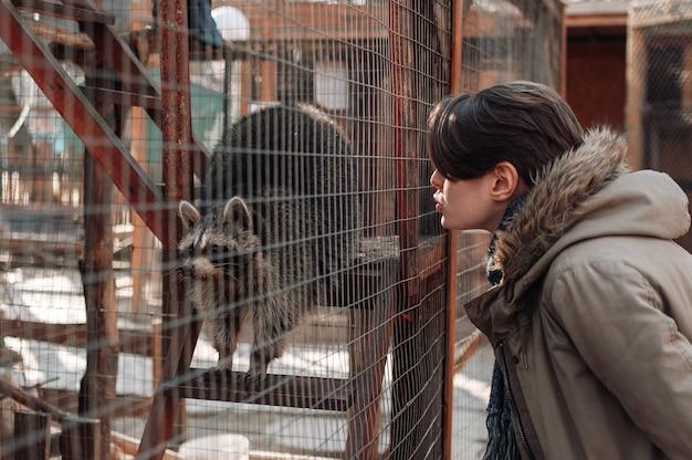 A garota chama um guaxinim no zoológico. guaxinim fofo fofo. um guaxinim domesticado em uma gaiola em um zoológico. foco seletivo