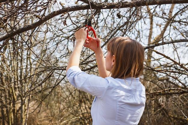 A garota corta os galhos das tesouras de maçã vermelhas no jardim